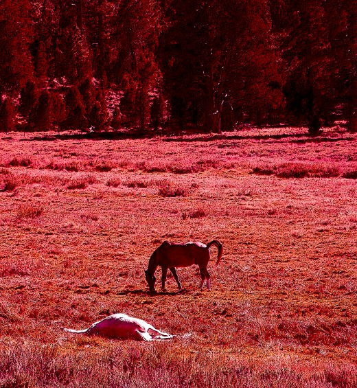 a russet field with relaxing horses can look more intense with a red photo filter..