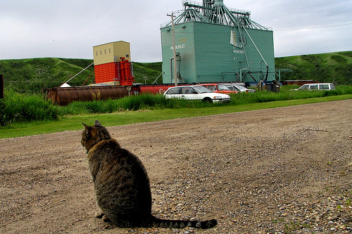 Rosebud looks a typical Alberta town: with a grain elevator, and a cat!