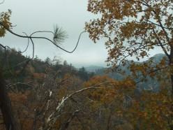 Trees In The San Bernardino Mountains