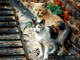 The New York City Feral Cat Initiative is a joint program of the Mayor's Alliance for NYC's Animals and Neighborhood Cats, two private non-profit organizations. Our mission is to solve the feral cat overpopulation crisis in New York City through...