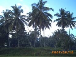 http://s4.hubimg.com/u/5809743_f248.jpg