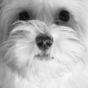PrincessShoshauna profile image