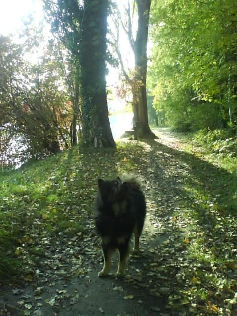 Autumn Scenery - Walk Along The River