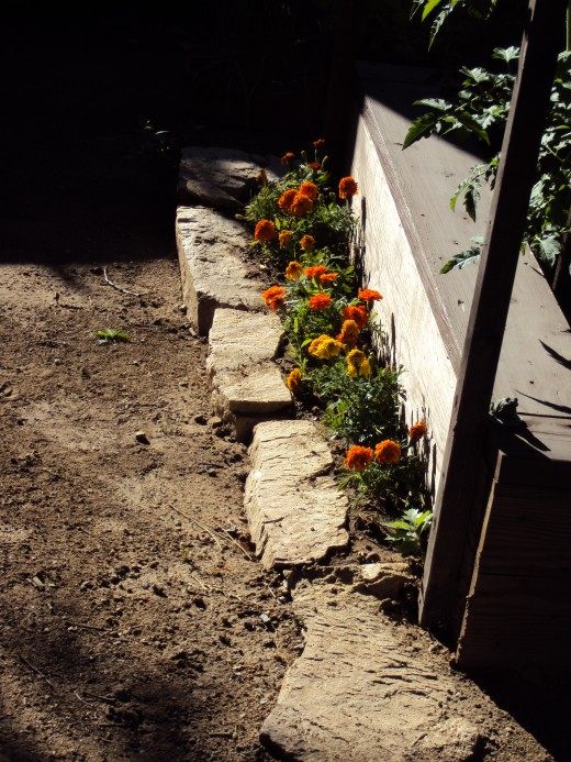 Marigolds planted along the garden path.
