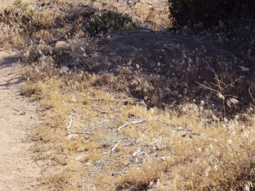 Weeds growing on a trail up in the San Bernardino Mountains.
