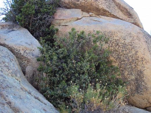Brush growing in between the boulders.