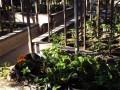 Summer Garden Photography