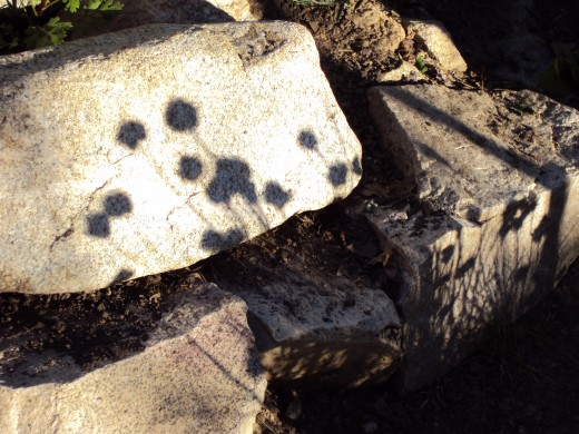 The shadow of chive flowers on a rock in the garden.
