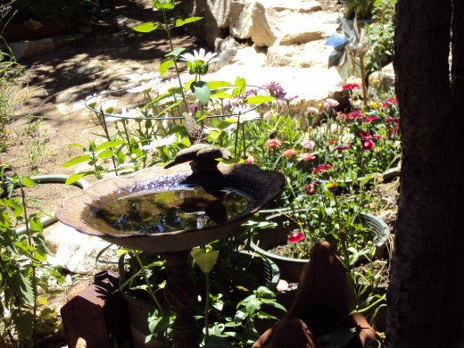 Reflections in the bird bath.