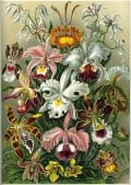Orchids: A History of Sex, Drugs & Lies