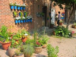 sidewalk and wall garden