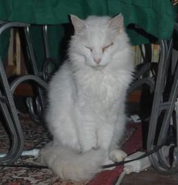 'Tuff' Tough, Emperor of his own.