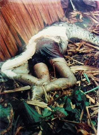 lower body part and legs of man are shown after snake was killed and ripped open.