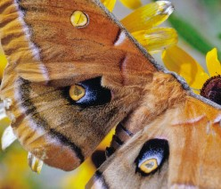 45 Macrophotography / Microphotography Images of Butterflies, Moths and Caterpillars
