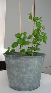 Mint leaves are best to fresh the air
