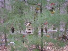 Edible Tree For Birds