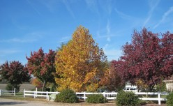 Trees in Autumn: A Seasonal Display of Splendor and Sadness