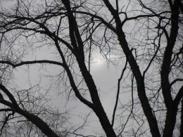 Dead tree - barren in the fall