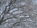 Snowflakes: What Are They, Really? What is Snow?