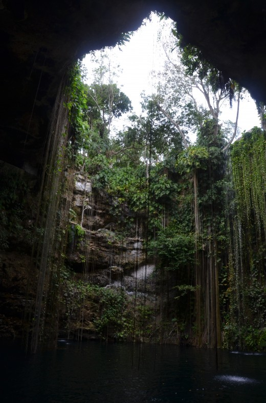The view from inside the cenote