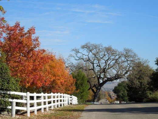 This is a view down the hill on this Templeton country lane. You'll see it better if you click to make it full size.