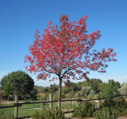 This tree was next to the road in Lawrence Moore Park in Paso Robles.