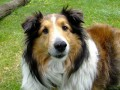 List of Family Friendly Dog Breeds