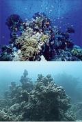 Destruction Of Coral Reefs
