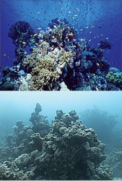 Destruction Of Coral Reefs