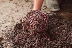 Worm Farming Made Easy