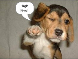 "Doggie ""high five"" - just too cute!"