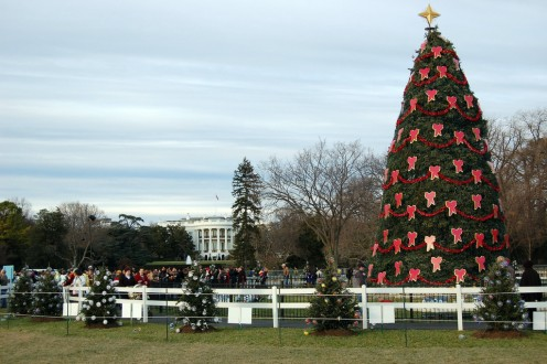 The National Christmas Tree in 2007