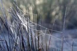 Winter frost