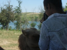 Up Close and personal with a camel at The Wilds animal park