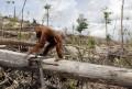 Rainforests and Deforestation