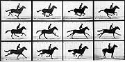 Eadweard Muybridge's chronophotographic study of a running horse, 1878