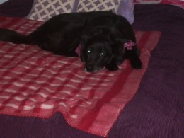 Sephi was not supposed to be on the bed but I caught her in the act!