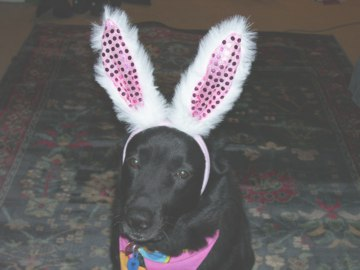 Sephi tolerating bunny ears just for me.