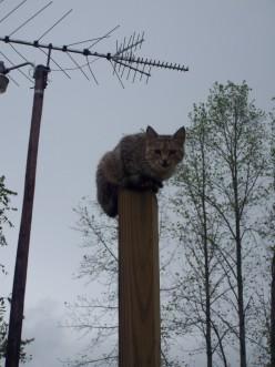 Cat Breed Types: Barn Cats