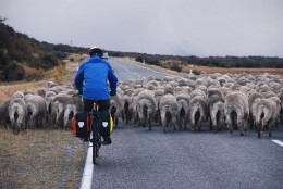 You might encounter heavy traffic like this on your bike rides for weight loss.