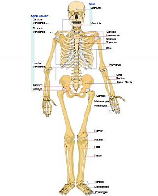 Walking keeps the bones healthy, clipart by Mohamed Ibrahim, source Clker.com