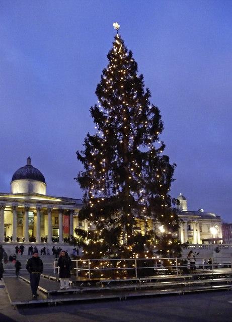 Christmas Tree in Trafalgar Square, London