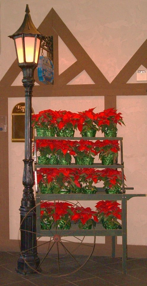 Old fashioned flower cart in boardwalk entrance foyer filled with poinsetta plants.