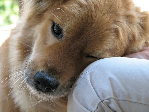 LOve from Noel Zia Lee  Source: flickr.com