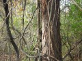 Fire Starters: Pine Kindling, Shingles, & Inner Tubes (Rubber)