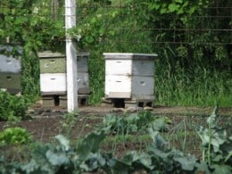 Traditional Bee Hives