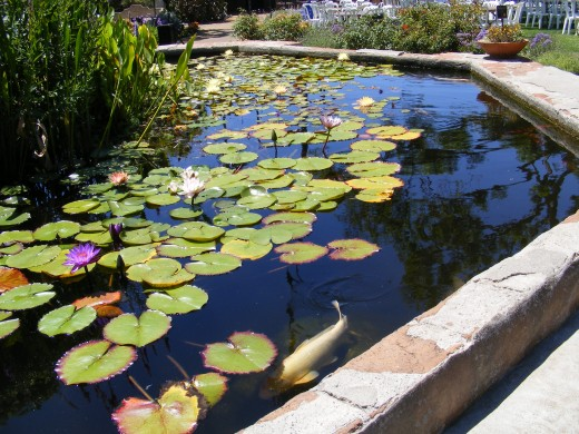 Koi pond at the San Juan Capistrano Mission.