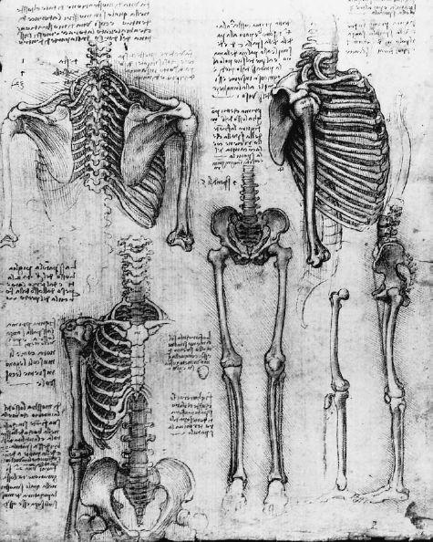 Skeletal study by Leonardo da Vinci