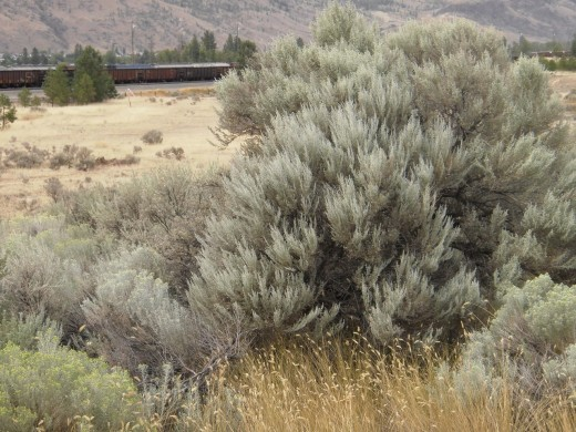 Silver Sages, Golden Grasses and Trains from Kamloops Wild West