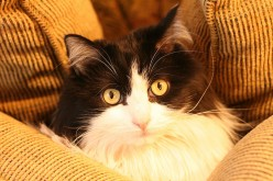 25 More Cat Idioms and Funny Cat Videos
